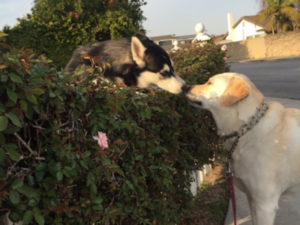 The Internet Is Obsessed With This Photo Of Two Dogs Kissing